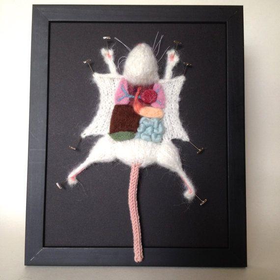 Rat de laboratoire en bonneterie : Encadré avec un fond noir