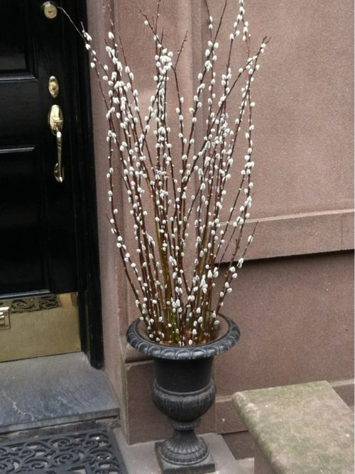 Do this with my pussy willow next winter!