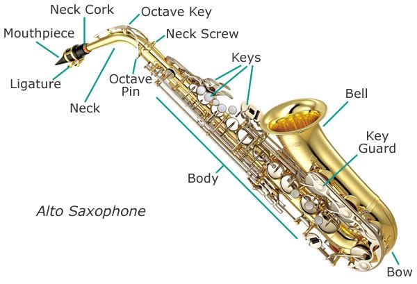 Single Reed Instruments - WELCOME TO GLADES MIDDLE SCHOOL BAND WEBSITE! HERE YOU WILL FIND IMPORTANT INFORMATION AND STUDY TOOLS TO IMPROVE YOUR MUSICIANSHIP.