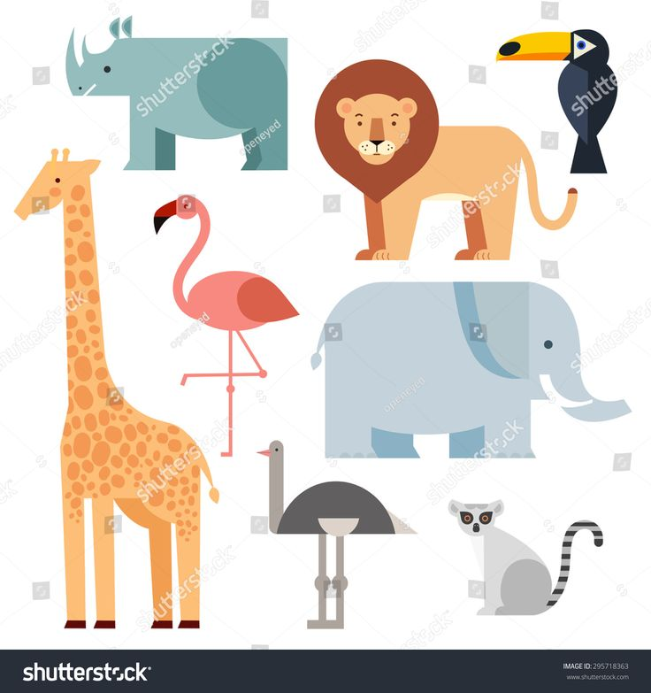 The 25+ best Images of giraffes ideas on Pinterest Giraffe - griffe für küche