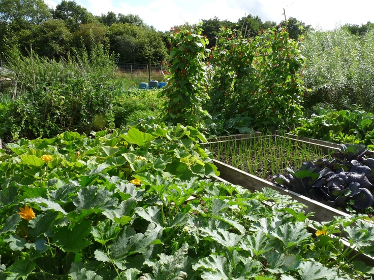 Kitchen garden for lovely fresh fruit and vegetables