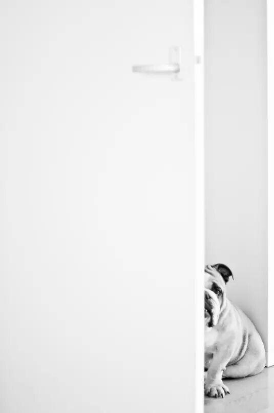 Pin By Dawn Mace On Bulldogs Baby Dogs Boxer Bulldog Dog Love