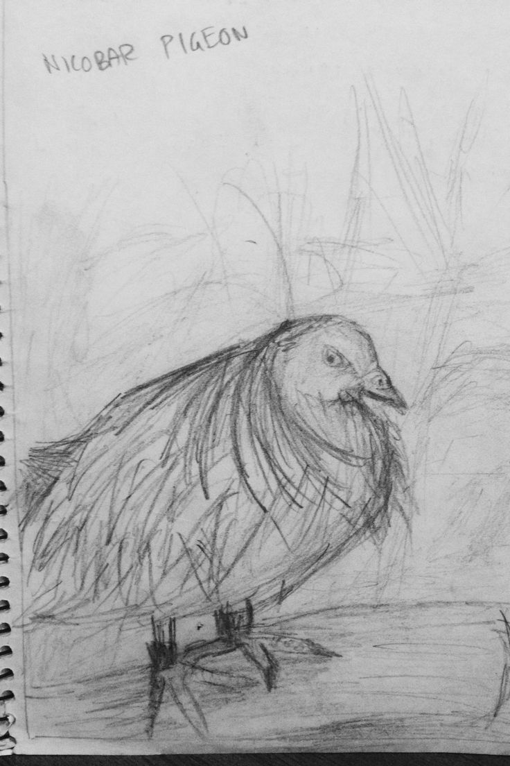 Line Drawing Year : Best zoo drawings year images on pinterest