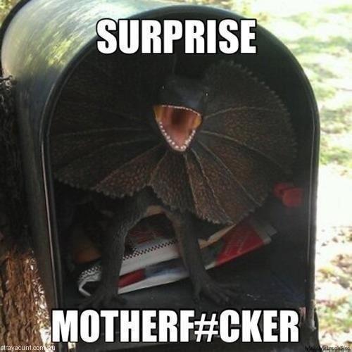 Straya Surprise LOL