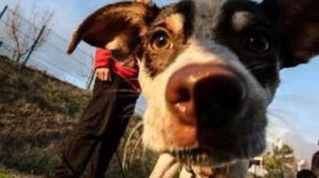 """Macabra disavventura da parte di una signora di Imola e del suo cane E' davvero incredibile quello che è accaduto ad una signora di Imola e al suo cane, mentre stavano facendo la """"classica passeggiata serale"""". La signora si è accorta, di quello che aveva in bocca il  #cane #signora #passeggio #disavventura"""