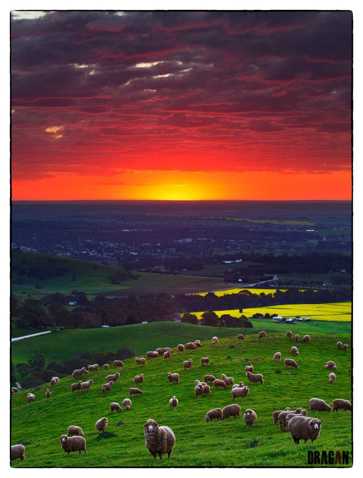 """Sunset over Lyndoch, Barossa Valley"", South Australia's wine country"