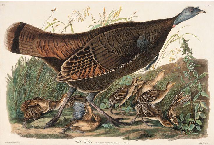 Rare Prints Wild Turkey - Female
