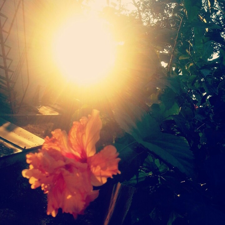 Sun near ur handz