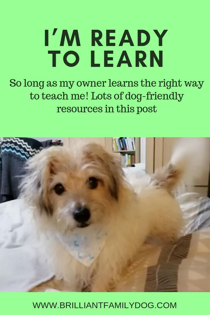 Is Your Dog Ready To Learn And Do You Know How Best To Teach Him In A Dog Friendly Way Find Out In This Post Free Course Newp Dog Training