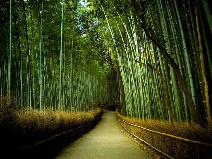 lugares bosque de bamboo japon