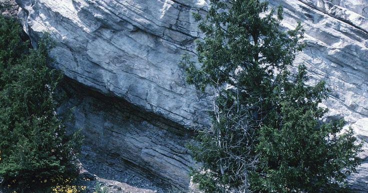 Curiosidades sobre a taiga . A taiga é um ecossistema, ou bioma, que tem participação significante no Canadá e regiões do norte da Ásia e Europa. A taiga é o maior bioma do mundo e compreende principalmente árvores coníferas, que são feitas de agulhas e ficam verdes o ano todo. O bioma taiga é também conhecido como floresta boreal.