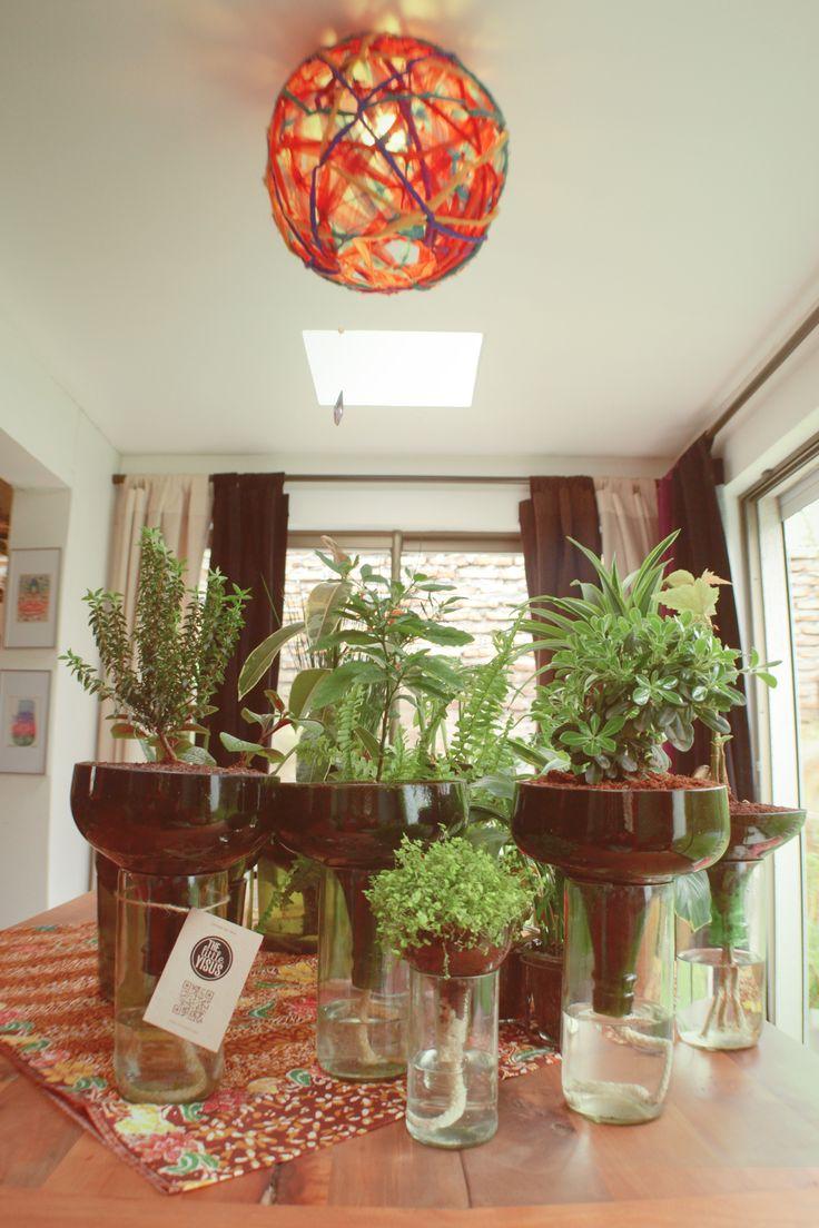 Plants, Plantas en botellas, Diseño ecológico, Diseño con botellas,Ecología, Botellas de vidrio, Materiales reutilizados, Materiales reciclados, eco, bio, emprendimiento verde, plantas ornamentales