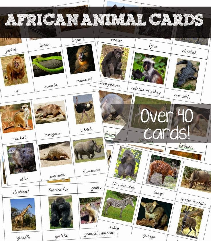 Free African Animal 3 part cards from Welcome to Mommyhood