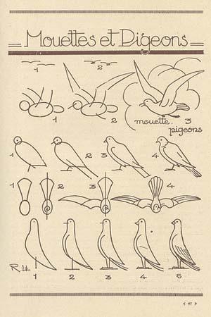 Mouettes et pigeons