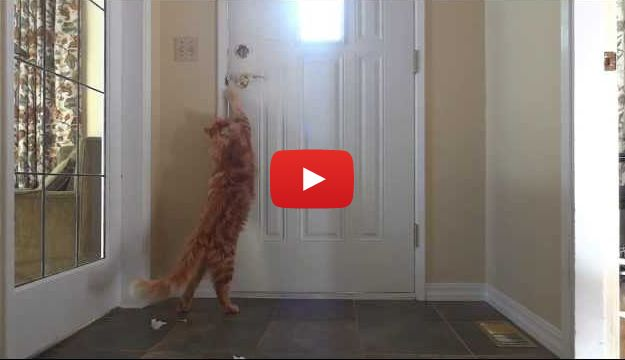Bentley the Cat Opens the Door and Lets Himself Out (VIDEO)