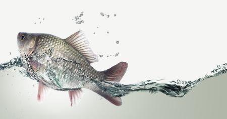 Cosas que hay que saber sobre el agua y los ecosistemas