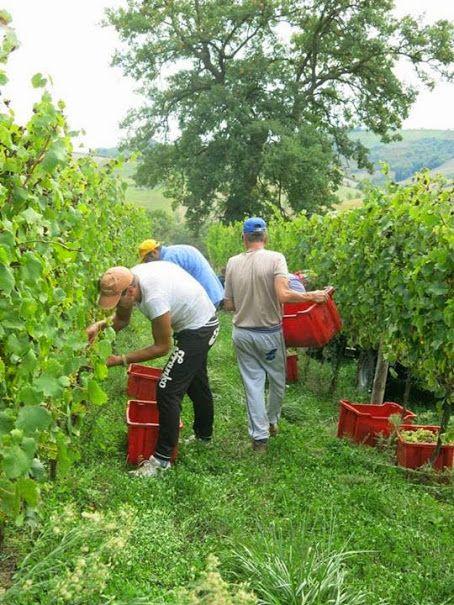 PS Winery svolge la lavorazione della vigna con attenzione e dedizione, realizzando manualmente le varie fasi della produzione, per assicurare l'elevata qualità delle uve. http://www.excantia.com/produttori/pswinery
