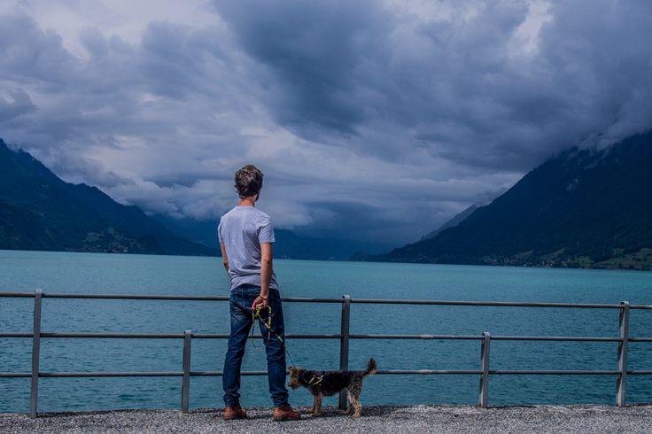 Lu the dog in Switzerland, Brienz. #dogtravel #switzerland #alps