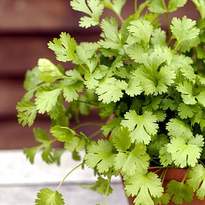 Cilantro, a favorite Mexican food herb, also helps draw toxic metals from your body. So don't hold back. | health.com