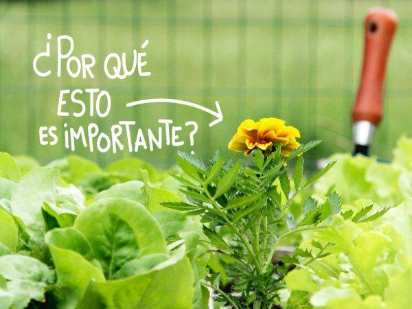 Die besten 25 hortalizas caseras ideen auf pinterest for Asociacion de cultivos tomate