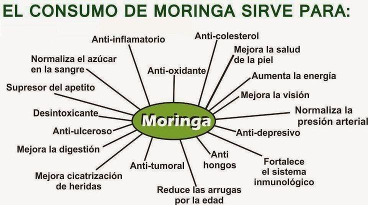 """Moringa oleífera: """"el árbol milagro"""" - Taringa! www.taringa.net3300 × 2550Buscar por imágenes La única parte del árbol que no debe ingerirse es la raíz, pues contiene una elevada dosis de un alcaloide que puede ser fatal."""