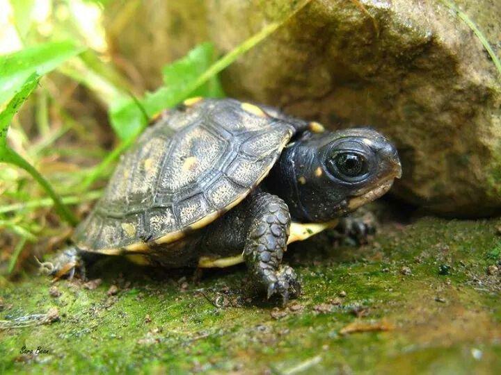 Cute tiny turtle!