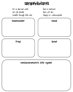 frogs.  metamorphosis.  difference between amphibians and reptiles.  free lesson activity.