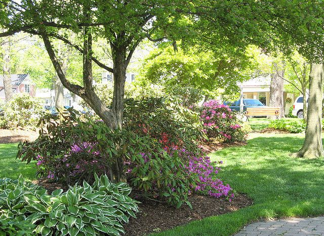 flowering shade garden ideas a flower garden under trees design inspiration for under black - Flower Garden Ideas For Under A Tree