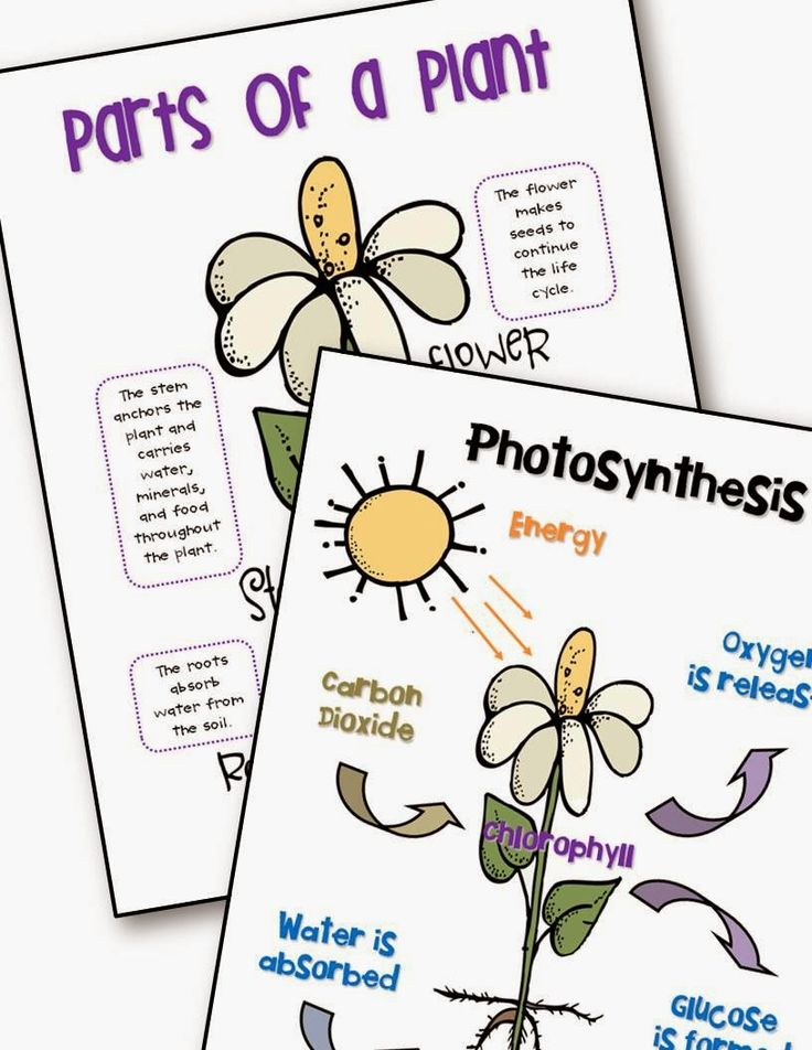8 best science- plants images on Pinterest Science, Teaching