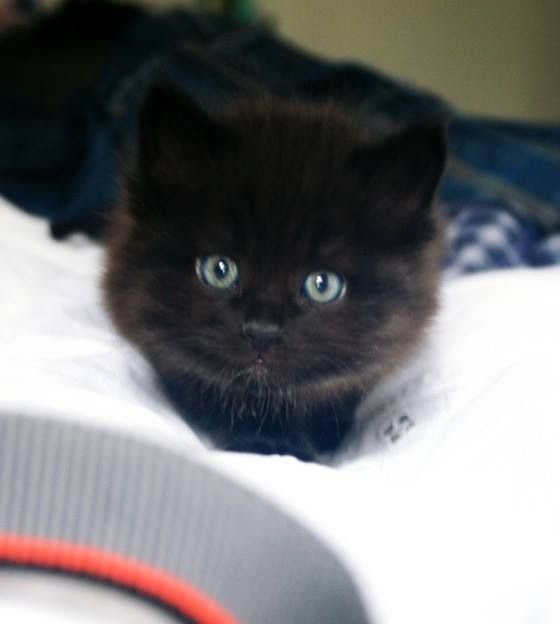 Black cat meow