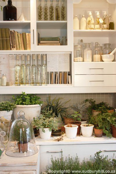 Herbs:  #Herbs. herbs in da house. in da dream kitchen
