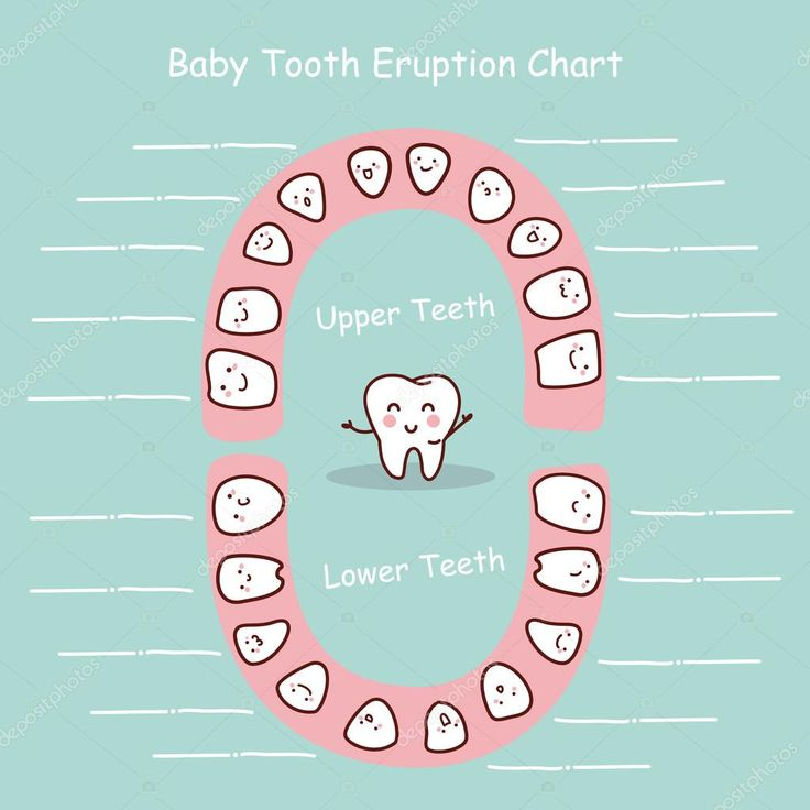 Baby tooth chart eruption record great for health dental