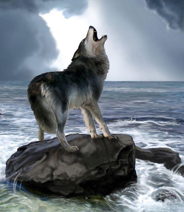 Картинки анимации с воющим волком, животные
