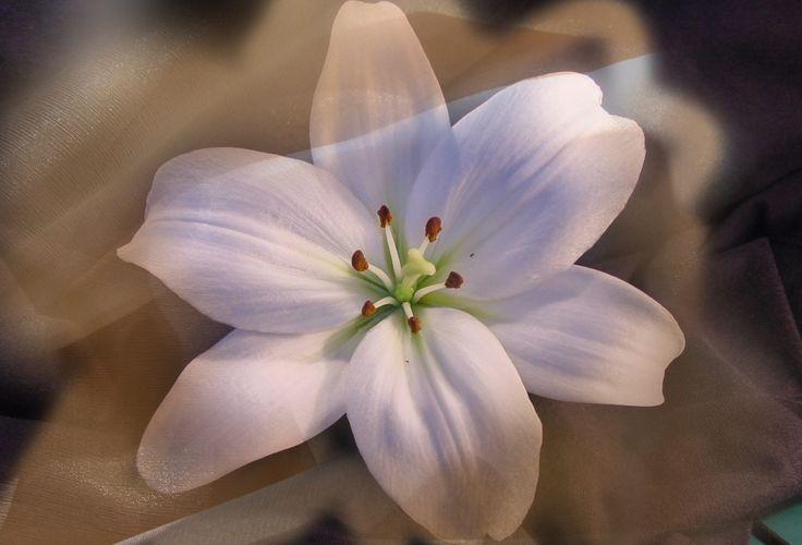 перерожденные цветы (декорация принта цветка органзой)