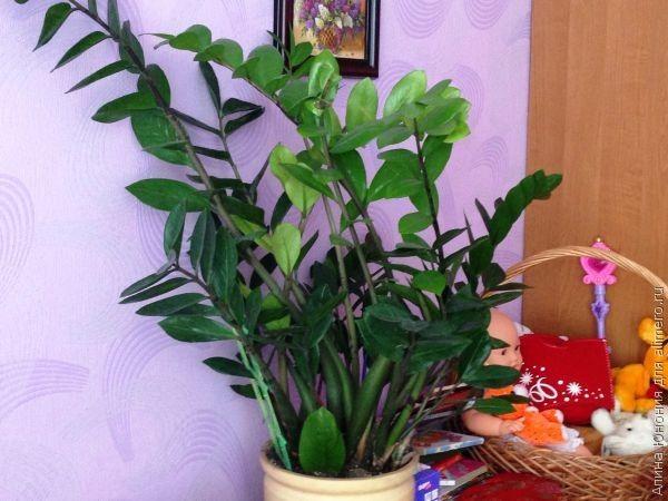 Неприхотливые комнатные растения / Зеленые друзья