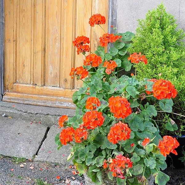 Easy container combos four at the front door for Potted plants by front door