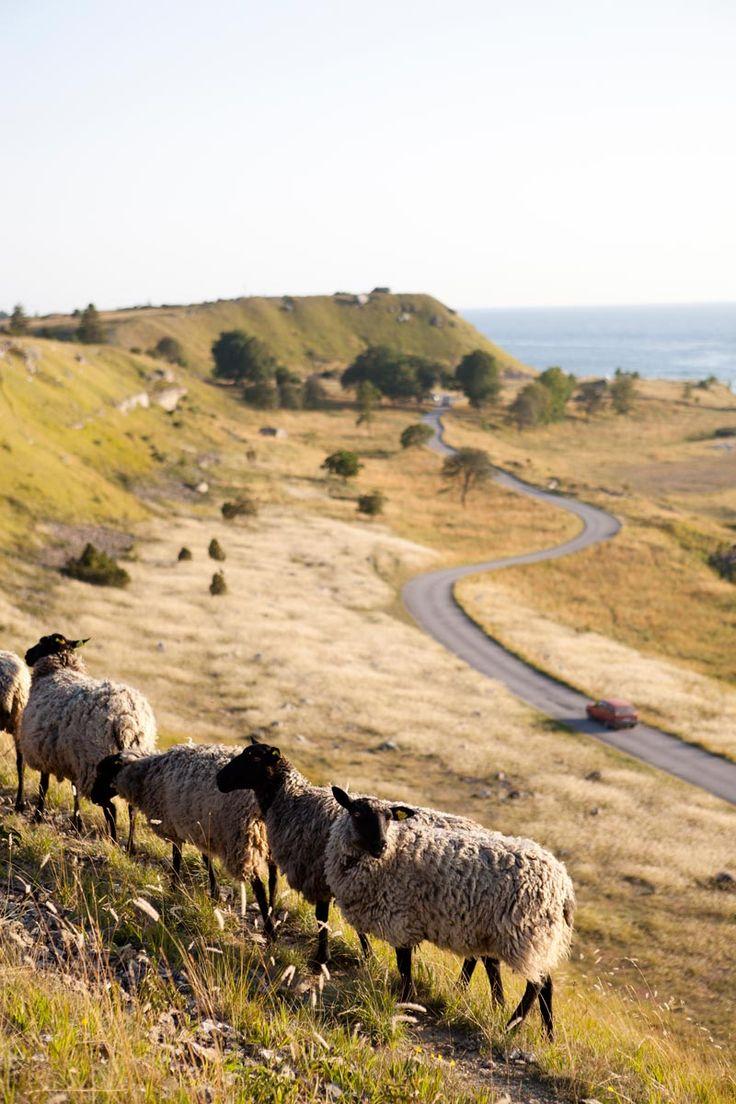 Storslagen natur på Sudret och Storsudret är en del av Gotland.