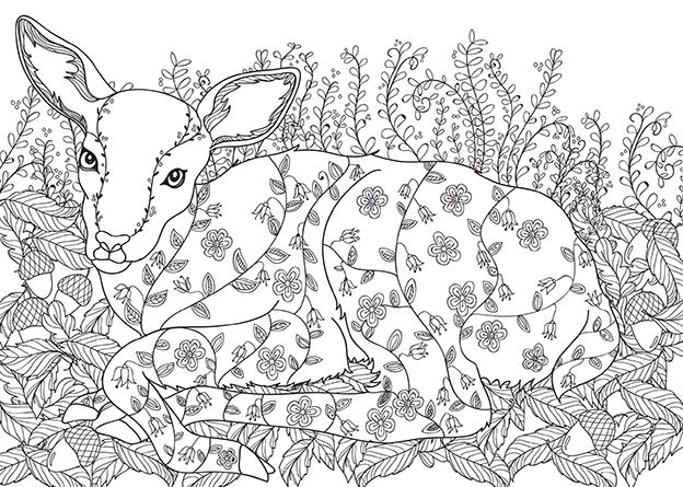 Enchanted Forest Colouring PagesColoring SheetsAdult ColoringColoring BooksJoanna