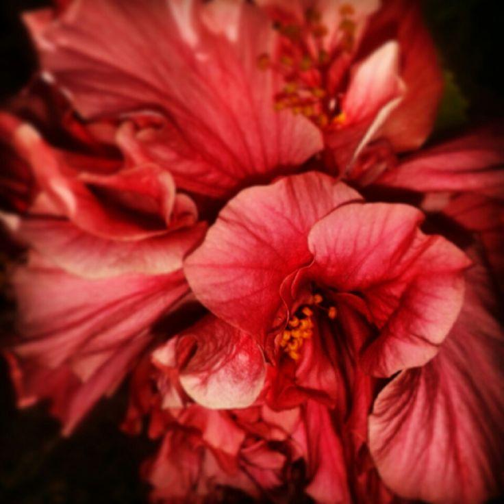 #Flower #Close_up #Petals