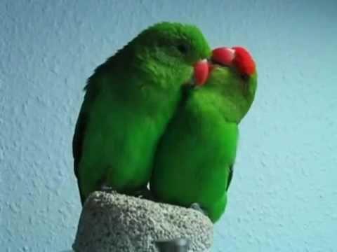 Lovebird!