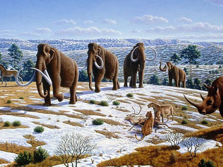 Today we have less than half of the species known as megafauna—an exclusive club whose members weigh at least 97 pounds when fully grown—on all continents but Africa. Where did these giants all go? In the past 50 years, archaeologists have started to come to a damning conclusion: Perhaps they would still be here if humans hadn't arrived on the scene.