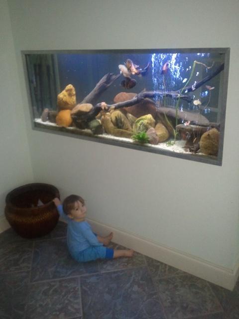 21 best big fish tanks images on pinterest big fish for Cat proof fish tank