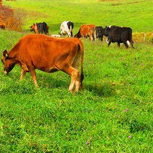 La estructura del suelo y su contenido en materia orgánica, un terreno adecuado con suficientes nutrientes, las condiciones medioambientales o la elección de las variedades óptimas para cada región son vitales para optimizar los rendimientos en pastos.