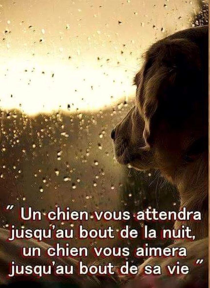Les hommes ne sont pas comme les chiens.. ils passent leurs nuits et ils d'arrêtent en cours de vie...commune parce qu'ils sont comme ça . .tout passe et tout casse . Sauf la fidélité Animale celle qui est silencieuse .