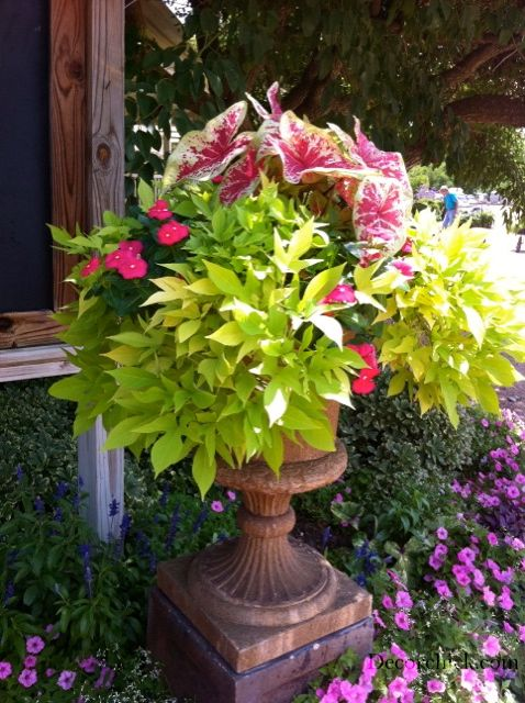 Beautiful Container Garden Ideas | Decorchick! Changing her world, one project at a time