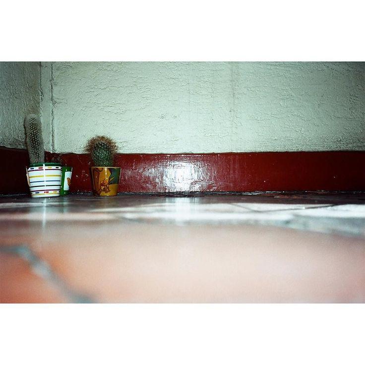 #ishootfilm #centralAmerica #centralAmerica #analogphotography #filmisnotdead #35mm #35mmfilm #35mmfilmcamera #35mmfilmphotography by edwards_bethany