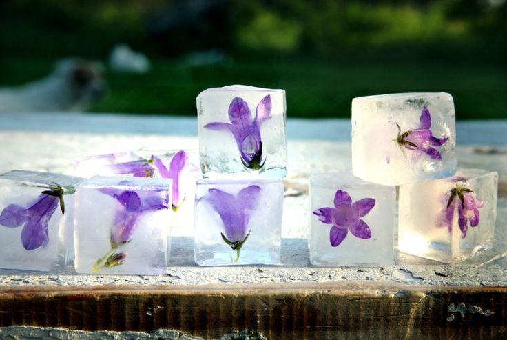 Flowery Ice cubes