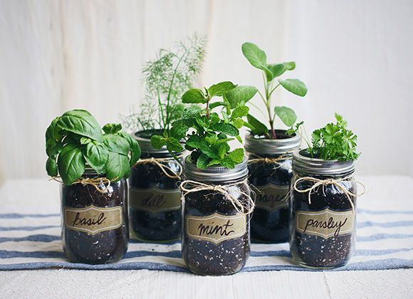 Mini herb garden in mason jars.