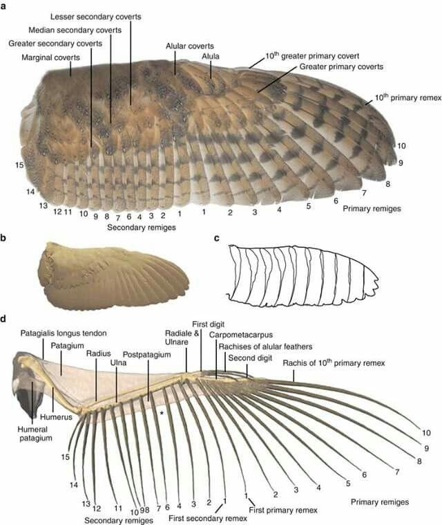 8 besten Anatomy Bilder auf Pinterest | Tieranatomie, Anatomie und ...