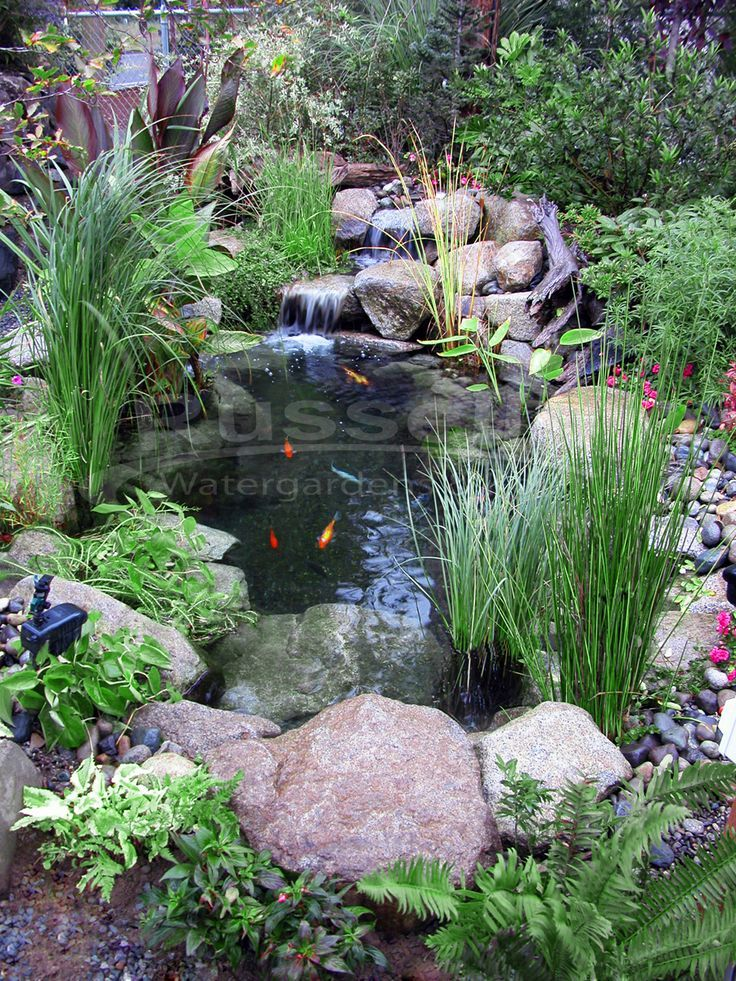 25 best ideas about small garden ponds on pinterest Backyard pond ideas with waterfall